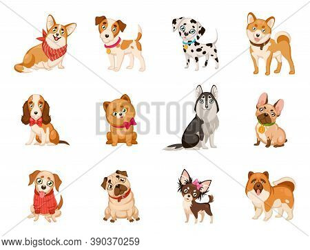 Funny Dogs. Cute Cartoon Puppies Different Dog Breeds Set, Corgi And Husky, Dalmatian And Toy Terrie