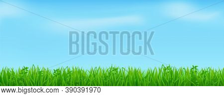 Green Grass On Spring Lawn Or Field. Vector Realistic Border Of Summer Meadow Plants On Background O