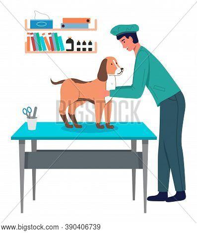 Dog At Reception Of Veterinarian. Veterinarian In Protective Uniform Examines Pet On Vet Table. Shel