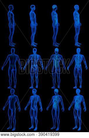 12 X-ray Hologram Renders Of Male Body With Skeleton And Internal Organs - Physiology Concept For Sc
