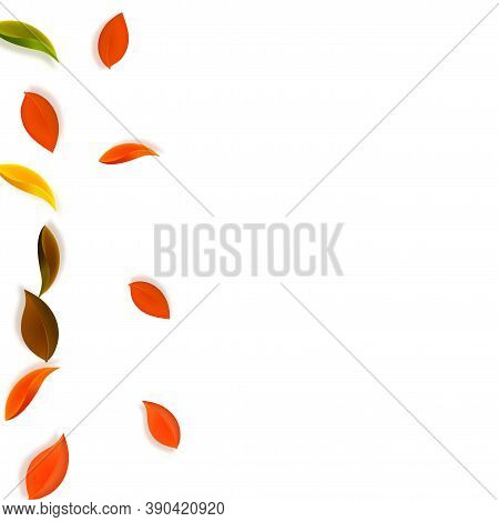 Falling Autumn Leaves. Red, Yellow, Green, Brown Neat Leaves Flying. Gradient Colorful Foliage On Va