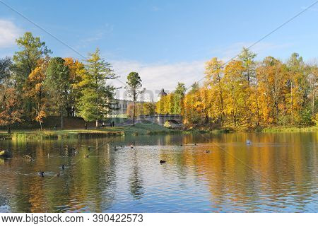 Golden Autumn In The Beautiful Park In A Sunny Day