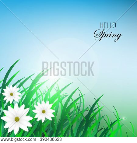 Hello Spring Inscription Made Of Grass. Spring Background With Green Early Spring Grass On Blurred S