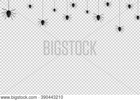 Spider  Hanging From Spiderwebs On Png Or Transparent    Background, Halloween Banner Isolated On Ni