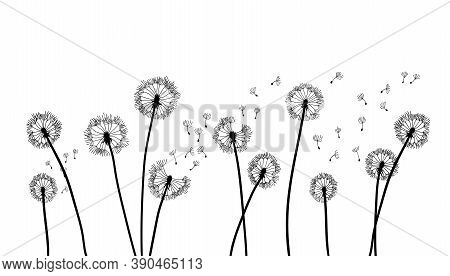 Dandelion Time Background. The Wind Inflates A Dandelion. Black Silhouette With Flying Dandelion Bud