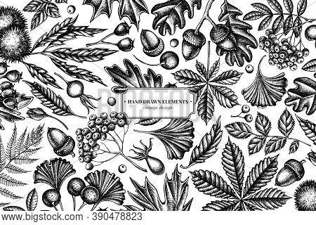 Design With Black And White Fern, Dog Rose, Rowan, Ginkgo, Maple, Oak, Horse Chestnut, Chestnut Hawt
