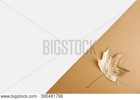 Autumn Season Abstract Background. Fall Golden Leave On Nude And White Background. Thanksgiving Day.
