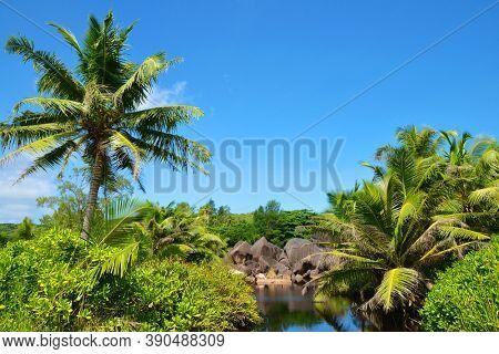 Tropical lake in jungle near Petite Anse Beach, La Digue island in Seychelles.