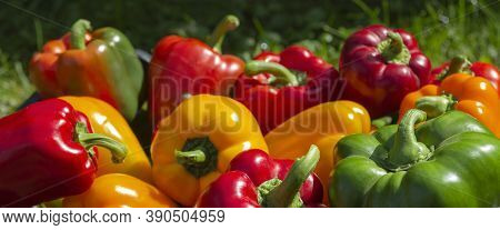 A Colorful Mix Of Paprika Capsicum In A Box On A Green Grass Background.banner Format.