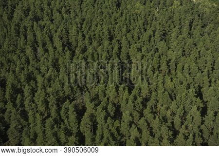 Aerial View Of Evergreen Trees, Tree Top Texture. Beautiful Green Fir Forest Top Down Drone. Forest,