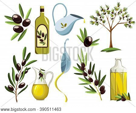 Organic Olive Products Set. Oil Elements. Fresh Ripe Tree Fetuses And Fragrant Oil In Bottles And Ju