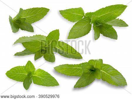 Set Of Fresh Mint Isolated On White