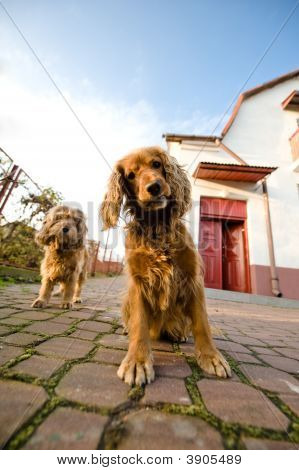 Two Dogs In A Front Of House