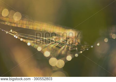 Abstract Blurry Green Background With Bokeh. Copy Space Blurred Cobwebs In The Dew. Abstract With Sh