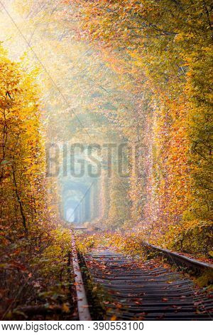 Fantastic Autumn Trees Tunnel with old railway - Tunnel of Love. Natural tunnel of love formed by trees. Ukraine