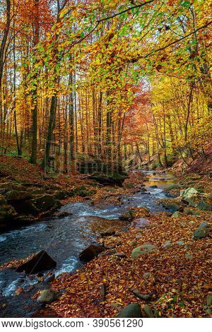 Mountain Stream In Autumn Forest. Water Flow Among The Rocks. Trees In Colorful Foliage. Sunny Weath