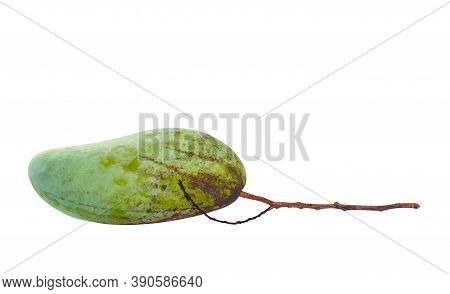 Raw Mango Green, Fresh Mango And Stalk Branch, Mango Fruit Single Isolated On White, Clipping Path