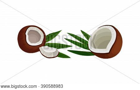Cracked Coconut With Hard Shell And Fibrous Husk Showing White Inner Flesh Vector Set