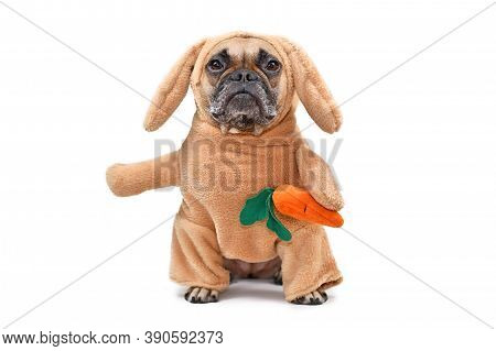 Funny French Bulldog Dog Dressed Up As Easter Bunny Wearing A Full Body Rabbit Costume With Fake Arm