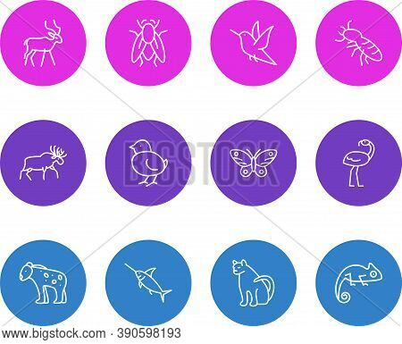 Vector Illustration Of 12 Zoo Icons Line Style. Editable Set Of Humming Bird, Fly, Poultry And Other