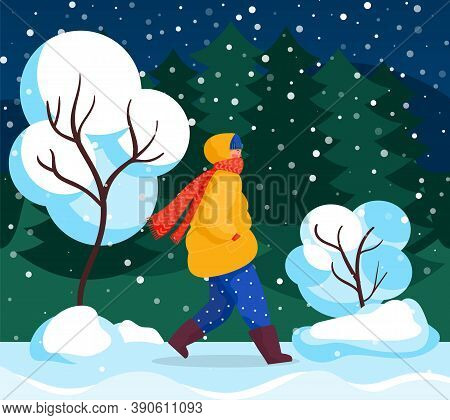 Character Walk In Winter, Forest Landscape And Snowfall Vector. Trees Covered In Snow, People Walkin