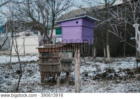 Beehives In Apiary Covered With Snow In Wintertime In The Frosty Dawn Or The Sunset. Colorful Beehiv