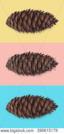 Spruce Cone, Fir Cone. Dry Coniferous Cone. Isolated Realistic 3d Object Presented On Yellow, Red An