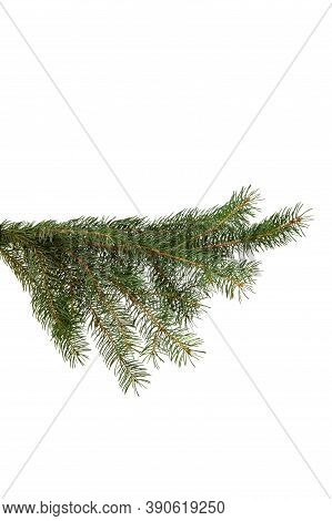 Green Fir Branch Isolated On White Background, Christmas. Close-up