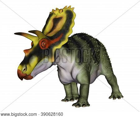 Anchiceratops Dinosaur Isolated In White Background - 3d Render