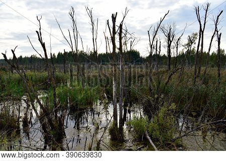 Wetlands In The Most Beautiful Places Of The Wild. Swamp Water Landscape. Wildlife Background. Small