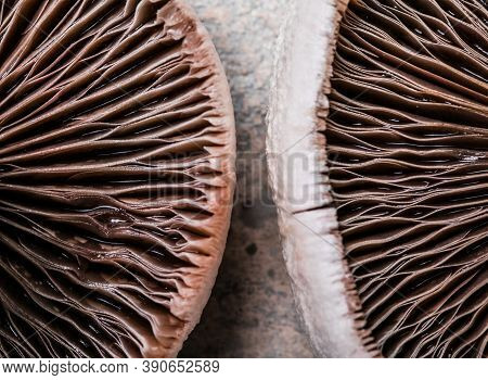 Texture Of Fresh Mushrooms. A Lot Of Mushrooms Collected. Fresh Mushrooms Close-up. Background Of Ha