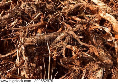 Pile Of Wood Roots. Root From Tree From Peat Bogs. Roots From Trees After Draining A Swamp For Peat