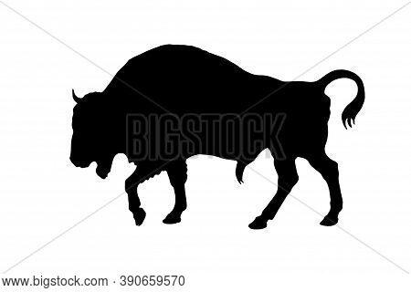Bison, Wild Bull, Hand Pencil Drawing Isolated On White Background For Greeting Cards, Calendars, De