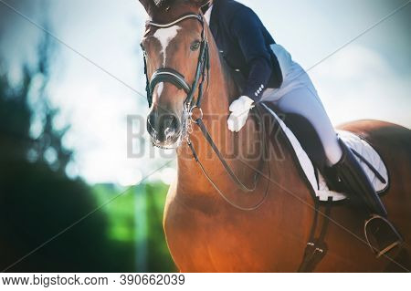 Portrait Of A Beautiful Bay Racehorse, On Which The Rider Sits In The Saddle And Praises Her, Gently