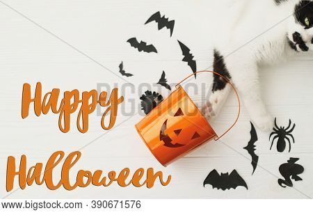 Happy Halloween Text On Cat Paws Holding Jack O Lantern Candy Pail On White Background With Bats And