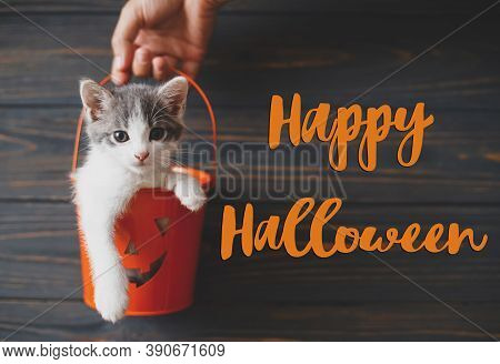 Happy Halloween Text On Cute Kitten Sitting In Halloween Trick Or Treat Bucket On Black Background.