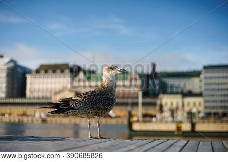 A Seagull Stands On The Pier Against The Background Of The City. Seagull On The Background Of Helsin