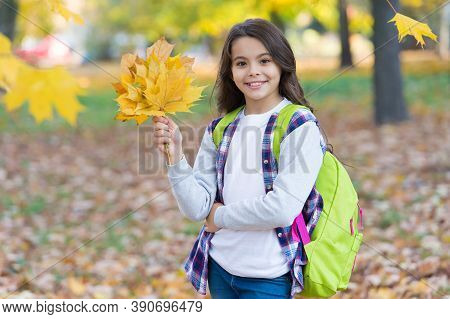 School Time. Fall Maple Leaves In Park. Seasonal Weather. Childhood Happiness. Beauty And Nature. Ha