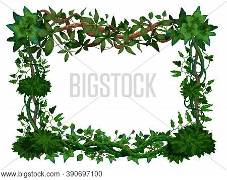 Tropical Twining Lianas Realistic Frame With Hedera Ivy Climbing Vine Exotic Plants Leaves White Bac