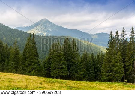 Nice landscape with forest on mountains background. Take it in Carpathians, Ukraine
