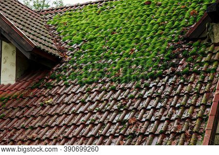 Shingle Roof With Green Moss On Surface Landmark Background Texture View In Moody Rainy Autumn Seaso