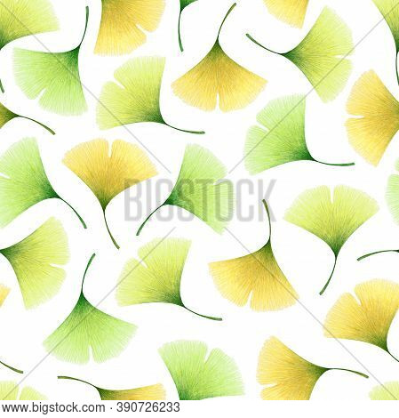 Watercolor Seamless Pattern With Hand Drawn Ginkgo Leaves Isolated On White Background. Autumn Illus