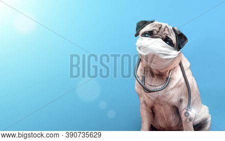 Portrait Of A Cute Pug Dog As A Medicine Doctor With A Stetoscope And Medical Mask On Its Face. Copy