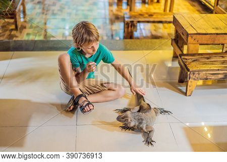 Boy And Iguana- Also Known As Common Iguana Or American Iguana, Is A Large, Arboreal, Mostly Herbivo