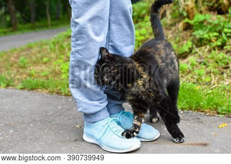 Stray Cat Rubs Legs, Problem Of Hungry Lonely Animals. Taking Care Of Street Cats. Take An Animal Fr