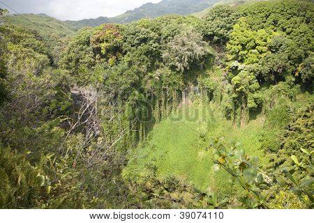 Rain Forest On Tropical Island