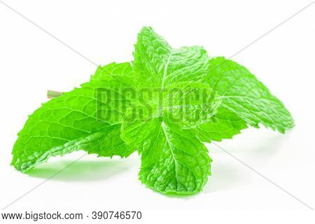 Fresh Spearmint Leaves Isolated On The White Background. Close Up Beautiful Mint, Peppermint.