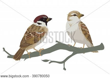 Couple Of Realistic Sparrows Sitting On Branch. Vector Illustration Of Little Birds Sparrows In Hand