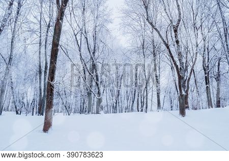 Winter forest landscape with falling snow - wonderland forest with snowfall over forest winter grove. Snowy forest scene with snowfall over forest trees. Winter forest landscape scene