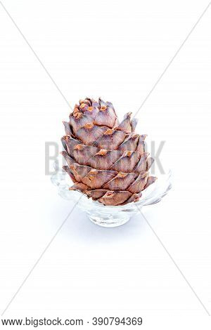Cedar Brown Cone In A Glass Cup, White Background, Resin